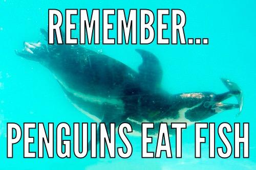 gotham PENGUINS EAT FISH